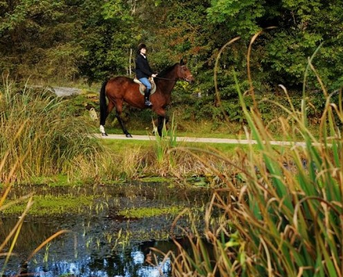 Equestrian Activities The Glenmalure Lodge